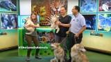 Los perros Siberianos se tomaron el set de Animalia